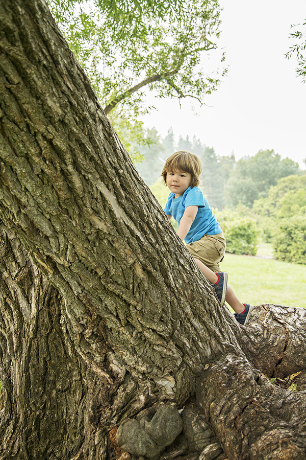 Outdoor Toddler Portraits in Giant Tree