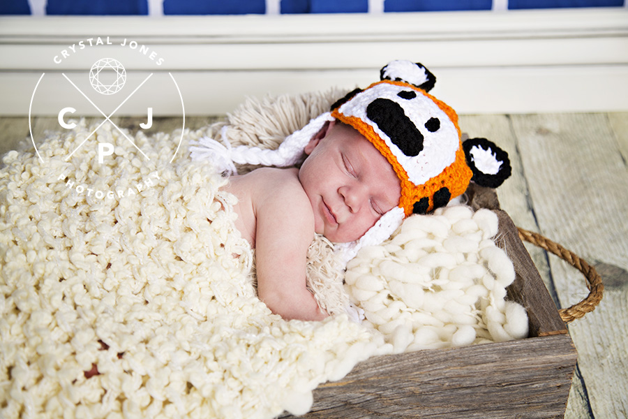 Calvin and Hobbes themed newborn photos