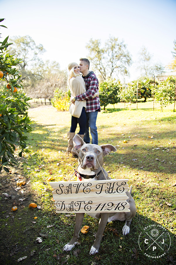 engagement portraits in a mandarin orchard with dog